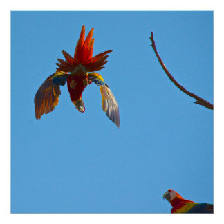 Colourful Macaw Birds Poster Wall Art