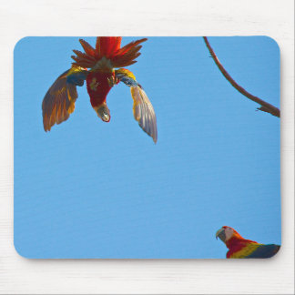 Colourful Macaw Mouse Pad