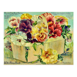 Colourful Pansy Flowers Vintage Seed Packet Cover Postcard