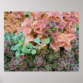Colourful Rainbow Coleus Plants Photograph Poster
