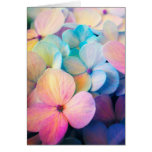 Colourful Spring Flower Card