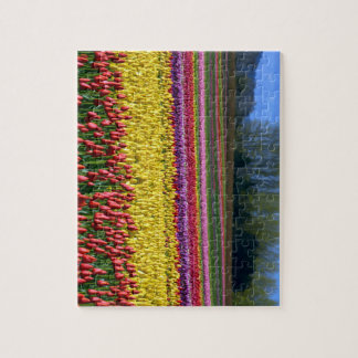 Colourful Tulip Field Jigsaw Puzzle