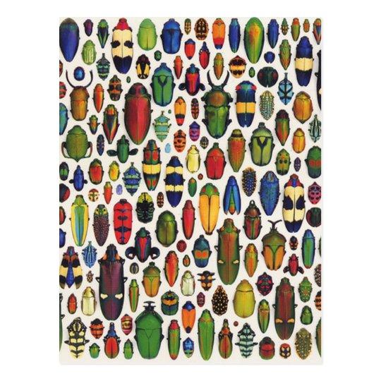 Colourful Vintage Illustrated Beetles Postcard