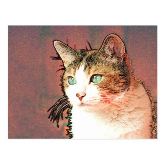 Colourkat Postcard