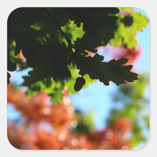 Colours of Autumn 02 Square Sticker