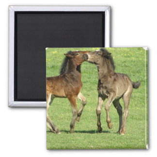 Colt and Foal Playing Magnet Magnet
