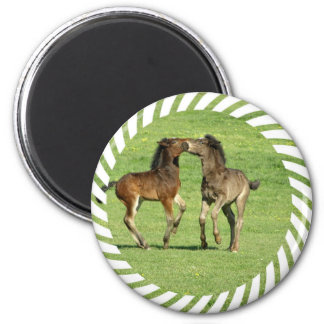 Colt and Foal Playing Magnet Fridge Magnets