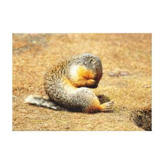 Columbia Ground Squirrel Canvas Print