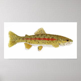 Columbia River Redband Trout Art Print