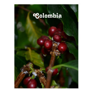 Columbian Coffee Beans Postcard