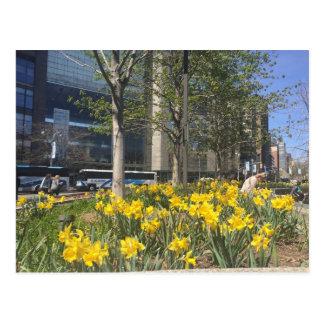 Columbus Circle Daffodils NYC Springtime Postcard