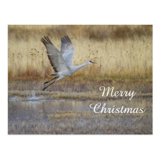 come fly with me, Merry Christmas Postcard