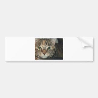 """""""Come if you dare"""" says the cat Bumper Sticker"""