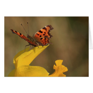 Comma Butterfly and Daffodil Card