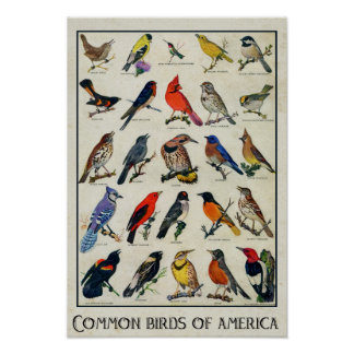 Common Birds of America Antique Bird Poster