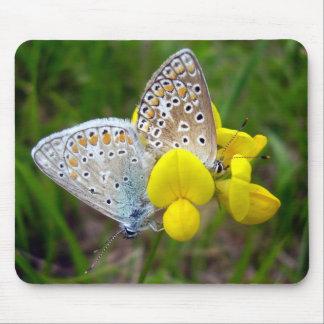 Common Blue Butterflies Mouse Mat