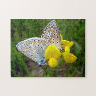 Common Blue Butterflies Photo Puzzle with Gift Box