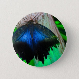 Common blue butterfly 2 inch round button