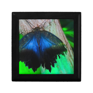 Common blue butterfly gift box