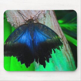 Common blue butterfly mouse pad