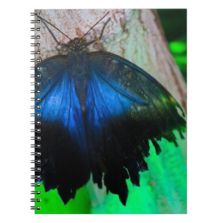 Common blue butterfly note books