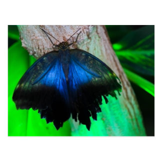 Common blue butterfly postcard