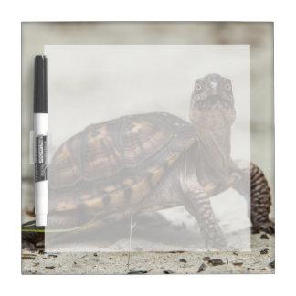 Common box turtle dry erase boards