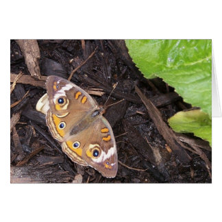 common buckeye butterfly card