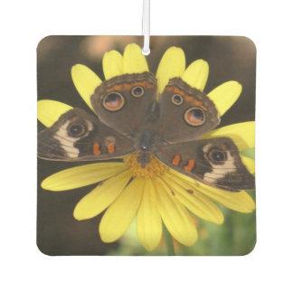 Common Buckeye Butterfly on a Daisy Air Freshener