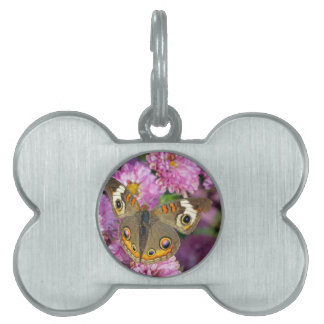 Common Buckeye Butterfly Pet Tag