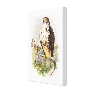 Common Buzzard John Gould Birds of Great Britain Canvas Print