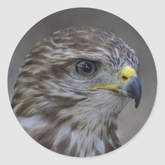 Common Buzzard Portrait Classic Round Sticker