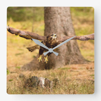 Common Buzzard Square Wall Clock
