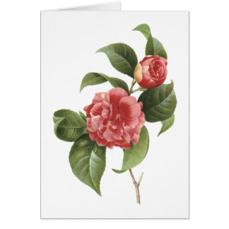 common camellia(Camellia japonica) by Redouté Card