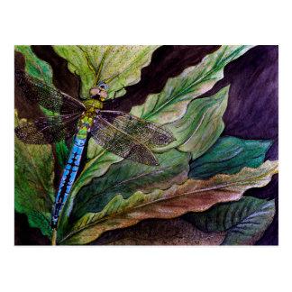 Common Darner Dragonfly Postcard