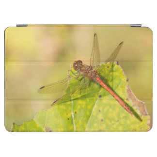Common Darter Dragonfly iPad Air Cover