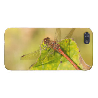 Common Darter Dragonfly iPhone 5/5S Cover