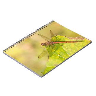 Common Darter Dragonfly Notebooks
