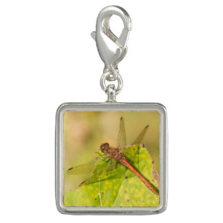 Common Darter Dragonfly Photo Charms