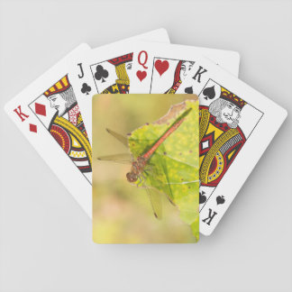Common Darter Dragonfly Playing Cards