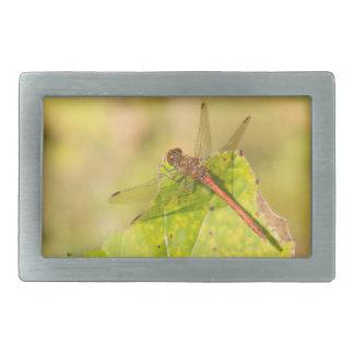 Common Darter Dragonfly Rectangular Belt Buckles