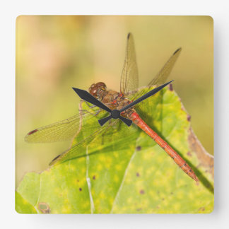 Common Darter Dragonfly Square Wall Clock