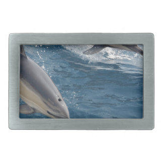 common-dolphins-914 belt buckle