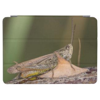Common Field Grasshopper iPad Air Cover