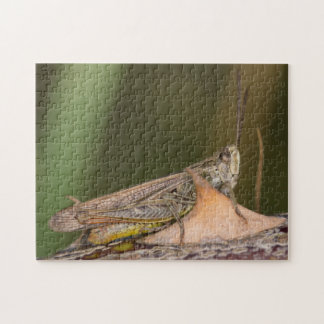Common Field Grasshopper Jigsaw Puzzle