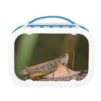 Common Field Grasshopper Lunch Box