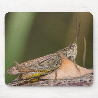 Common Field Grasshopper Mouse Pad