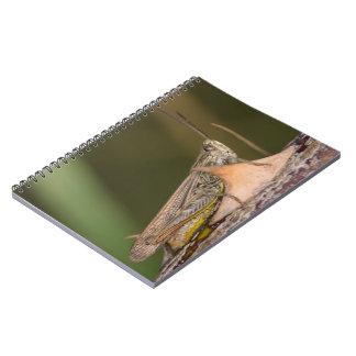 Common Field Grasshopper Spiral Notebooks