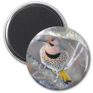 Common Flicker 2 Inch Round Magnet