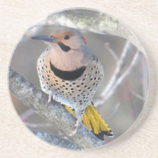 Common Flicker Drink Coaster